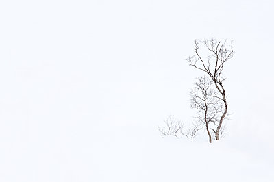 Trees in snow - p1256m2099735 by Sandra Jordan