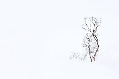 Bäume im Schnee - p1256m2099735 von Sandra Jordan