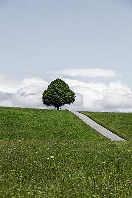Weg über den Hügel - p248m1040692 von BY