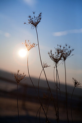 Winterflowers - p317m1119537 by Nina Steul