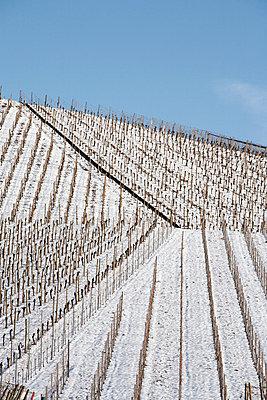 Weinberg im Winter - p5500123 von Thomas Franz