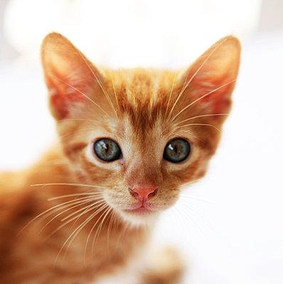 Junge Katze - p0453006 von Jasmin Sander