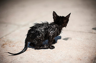 Little black cat - p1007m886830 by Tilby Vattard