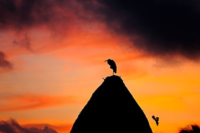 Bird perching on roof of beach hut at sunrise, Holbox Island, Mexico - p1166m2201481 by Beck Photography