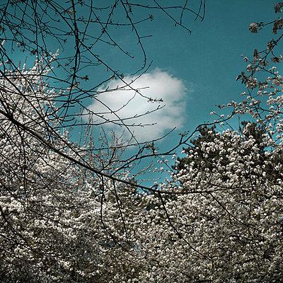 Treetop - p1240m1057439 by Adeline Spengler