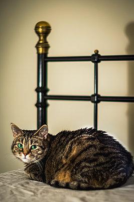 Katze auf dem Bett - p1418m1572299 von Jan Håkan Dahlström
