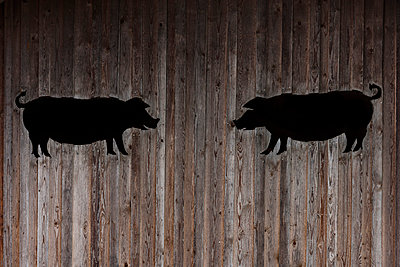 Two pigs - p867m1051097 by Thomas Degen