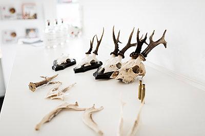 Deer antler - p1076m1492813 by TOBSN
