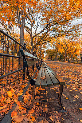 USA, New York City, Manhattan, Central Park in autumn - p300m2003992 by Raul Podadera Sanz