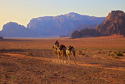 Bedouin with camels, Wadi Rum, Jordan, Middle East - p871m946698f by Neil Farrin photography