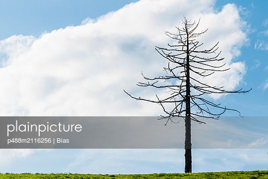 p488m2116256 by Bias
