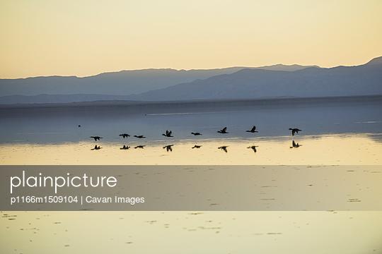 p1166m1509104 von Cavan Images