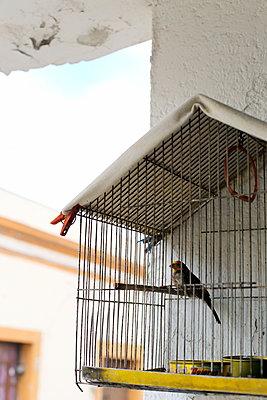 Bird in birdacge - p1063m1538377 by Ekaterina Vasilyeva