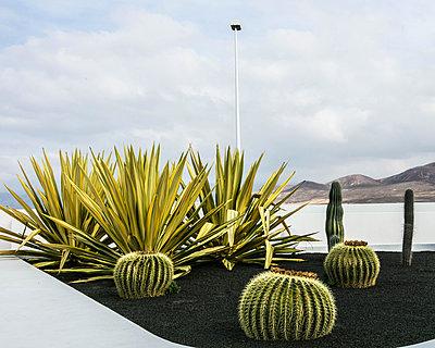 Kaktusgarten auf Lanzarote - p1082m1538970 von Daniel Allan