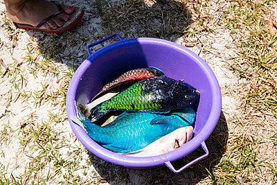 Fischfang - p1272m1515625 von Steffen Scheyhing