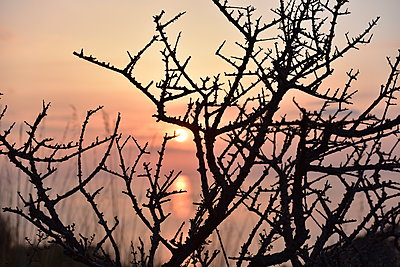 Spiny bush at sunset - p192m1200539 by Holger Pietsch