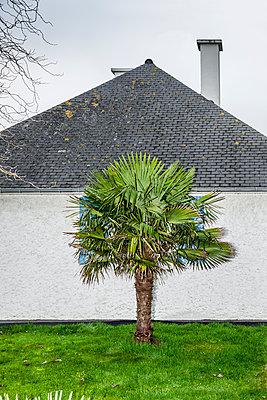 Palme im Vorgarten - p248m1225350 von BY
