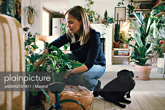 Full length of woman crouching by pug potting plant in room at home - p426m2101811 by Maskot