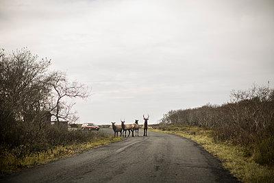 Deer crossing - p966m1120102 by Tobias Leipnitz