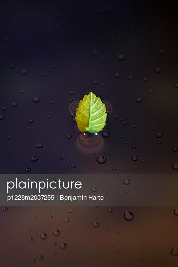 Leaf on water - p1228m2037255 by Benjamin Harte