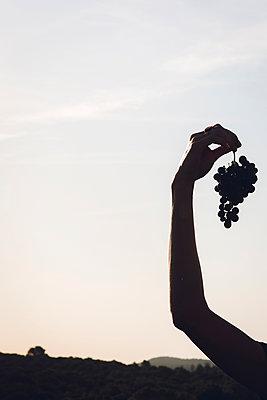 Frau hält Trauben in der Hand - p1150m2127049 von Elise Ortiou Campion