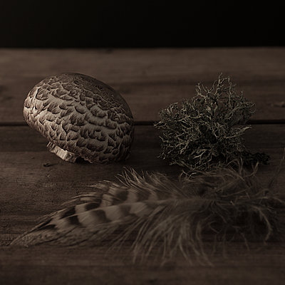Mushroom, feather and lichen on wood - p1470m1540273 by julie davenport