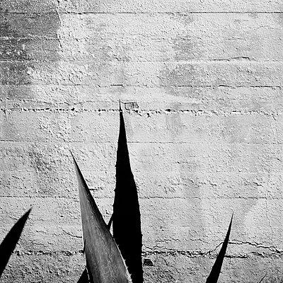 Aloe - p1661m2245366 by Emmanuel Pineau