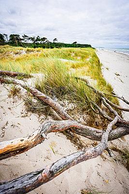 Germany, Mecklenburg-Western Pomerania, Zingst, beach - p300m2058759 by Kontrastlicht