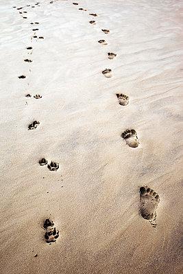 Spuren im Sand - p382m2053125 von Anna Matzen
