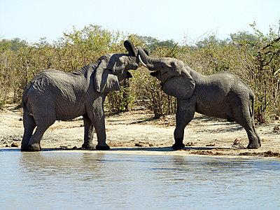 Botswana - p6520163 by Nigel Pavitt