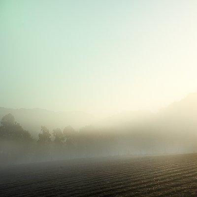 Feld im Nebel - p1137m2008721 von Yann Grancher