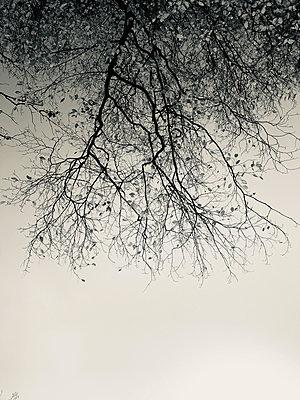 Kahler Baum - p341m2232202 von Mikesch