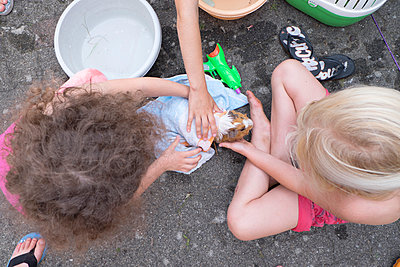 Girls playing with guinea-pig - p522m944554 by Pauline Ruhl Saur