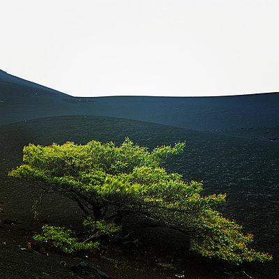Momotombo, Nicaragua - p844m880776 von Markus Renner