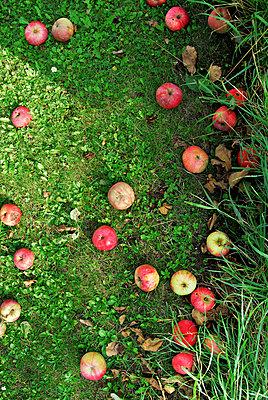 Apples - p9540017 by Heidi Mayer