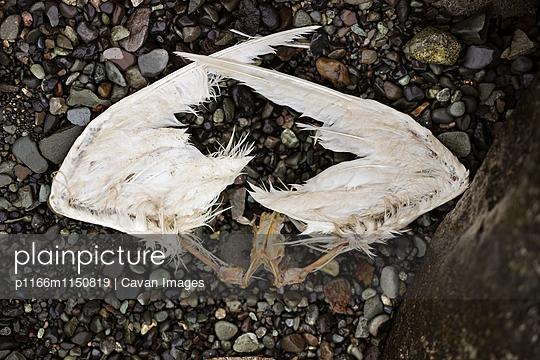 p1166m1150819 von Cavan Images