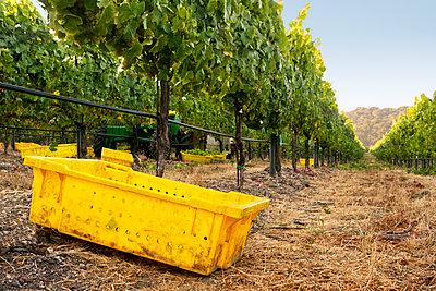 Plastic crates on field in vineyard - p1166m979761f by Cavan Images