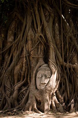 Overgrown buddha head - p1273m1503558 by Melanka Helms