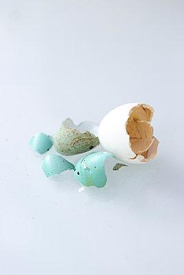 Empty bird's eggs - p454m2200611 by Lubitz + Dorner