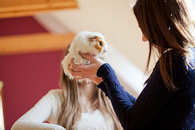 Girly with a Guinea pig - p586m660799 by Kniel Synnatzschke