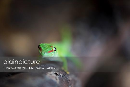 p1377m1581794 von Matt Williams-Ellis