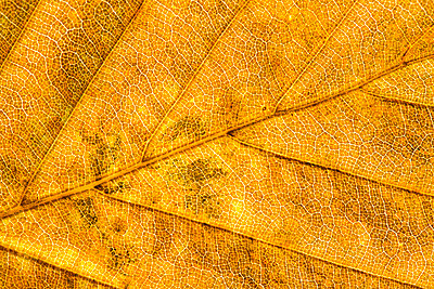 Leaf - p1057m1028481 by Stephen Shepherd