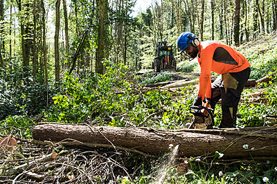 Man wearing bright orange top clearing part of forest. Cutting tree trunk with chain saw. - p1100m2010750 by Mint Images