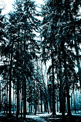 Forest - p965m931248 by VCreative