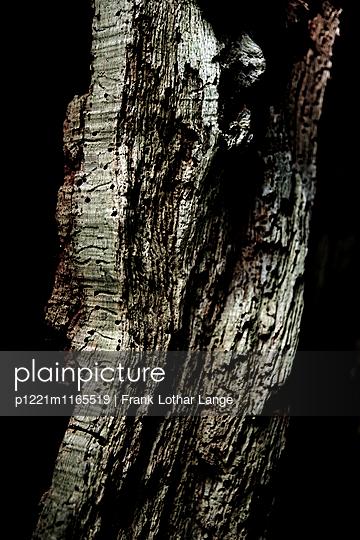 Morscher Baumstamm - p1221m1165519 von Frank Lothar Lange