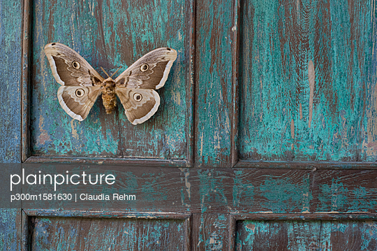 Painted blue wood, brown butterfly - p300m1581630 von Claudia Rehm