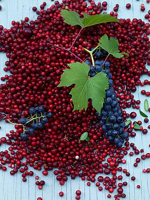 Cranberries und Weintraube - p1115m890254 von Nikolai Buroh