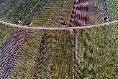 Germany, Baden-Wurttemberg, Rems Valley, Vineyards at Gundelsbach valley - p300m1587505 von Stefan Schurr