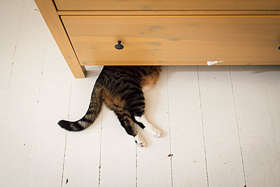 Cat lying under cupboard - p795m2160987 by JanJasperKlein