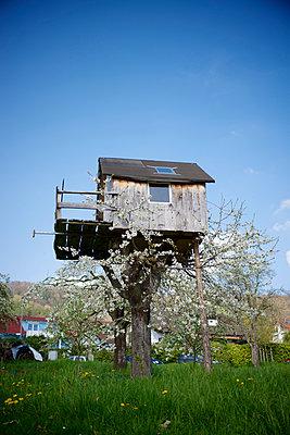 Holzhaus in einem Baum auf einer Wiese - p819m952190 von Kniel Mess